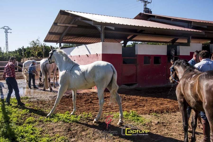 cuarta-concentracion-caballos-tentadero-la-paz-07